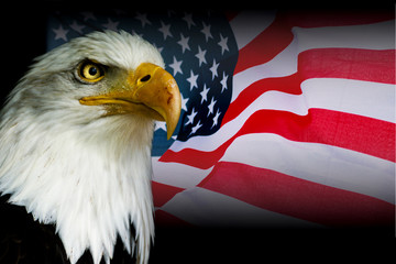 American symbol - USA flag with eagle
