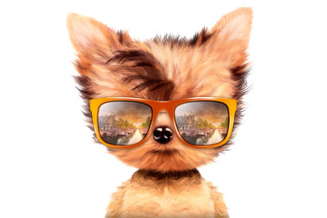 Dog in sunglasses isolated on white background