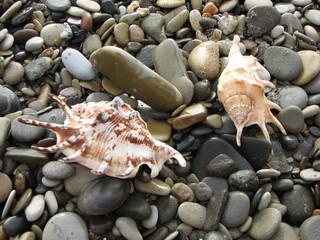 sea stones and seashells