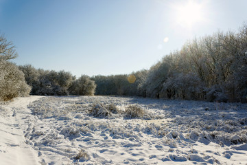 the outskirts of the forest in the snow, in sunny weather in winter