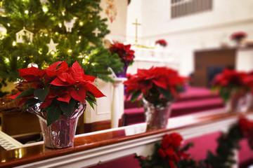 Church Poinsettias