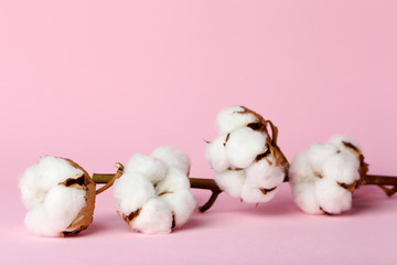 Cotton flowers on color background