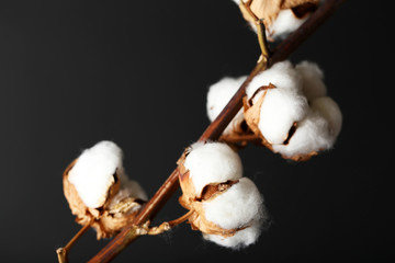 Cotton flowers on dark background
