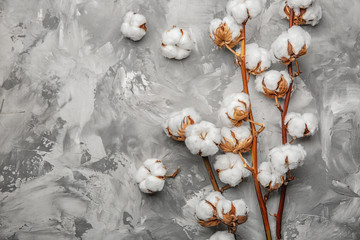 Cotton flowers on grey background