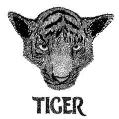 Tiger face. Drawn by hand vector illustration. Freehand drawing. Isolated on white background