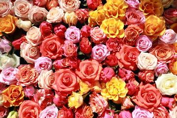 Viele Rosen