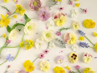 ナチュラルな春の花の花びら、白背景