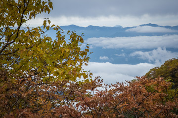 Top of Mt.Fuji and autumn tree
