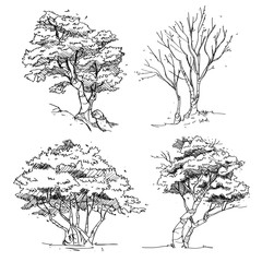 Set of Hand Drawn Trees : Vector Illustration