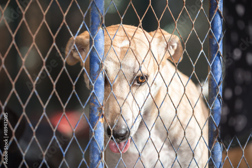 Abandoned stray dog in a metal cage of a stray dog shelter