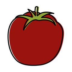 Tomato fresh vegetable icon vector illustration graphic design