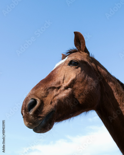 POV horse's head with lens distortion