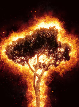 Tall leafy tree ablaze with fiery flames