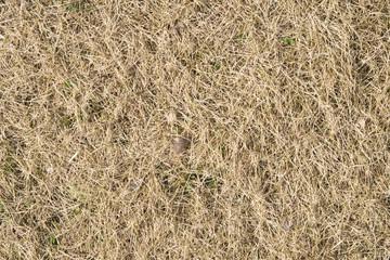 背景素材「芝生」