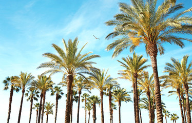 Travel, tourism, vacation, nature and summer holidays concept - palm trees, blue sky background amazing landscape