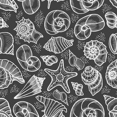 Collection of seashells drawn