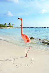 Garden Poster Flamingo Pink flamingo standing on the beach, Aruba island