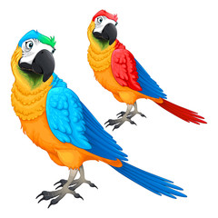 Funny parrots in two different colors
