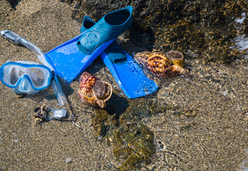 Mask with tube for snorkeling and flippers and two seashells on the sea beach.