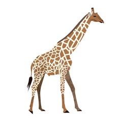 Cute cartoon trendy design little giraffe with closed eyes. African animal wildlife vector illustration icon.