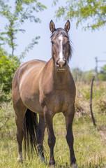 Hermoso caballo parado mirando a la cámara