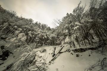 Winter season forest landscape.