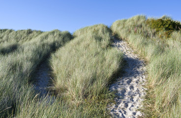 Laesoe / Denmark: Small trails through the dune landscape at the northeastern tip of the island to Danzigmann beach