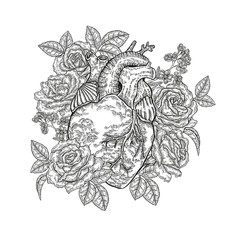 Hand drawn human heart with roses on white background. Vector illustration engraved