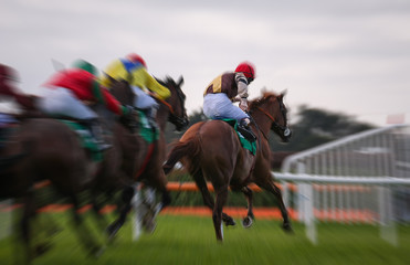 Motion blur of Galloping racehorses racing down the track