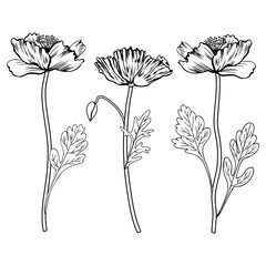Poppy flowers, bud, leaves vector hand drawn outline illustration isolated on white, ink sketch floral design set for greeting card, package cosmetic, wedding invitation, florist shop, coloring book