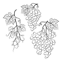 Bunch of Grapes with Leaves and Berries Black Contour Pictograms Isolated on White Background. Vector