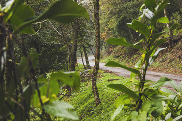 Mountain Road through forest Photograph