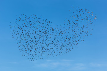 A flock of birds in the clear sky. A flock of birds in the sky.