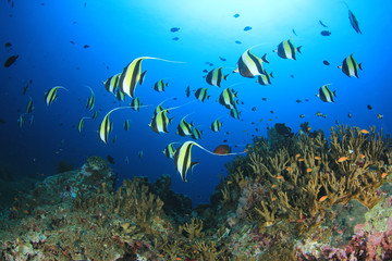 Deurstickers Onder water Coral reef and fish underwater