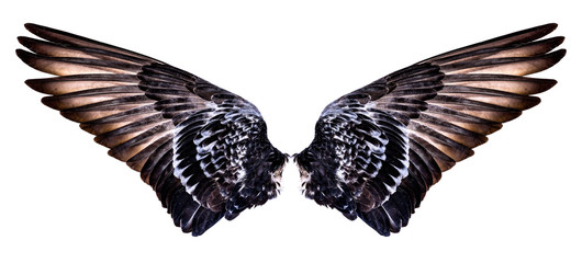 wings of bird isolated on white