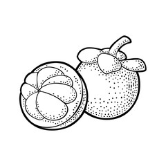 Whole and half mangosteen. Vector vintage engraving