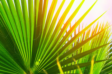 Natural Pattern from Large Round Spiky Palm Tree Leaves on Clear Blue Sky Background. Golden Sun Light Flare. Tropical Vacation Traveling Asia Caribbean Mediterranean. Banner Poster Template