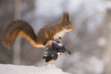 Red squirrel is sitting on  a snowmobile