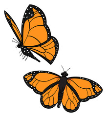 Two Flying Monarch Butterflies