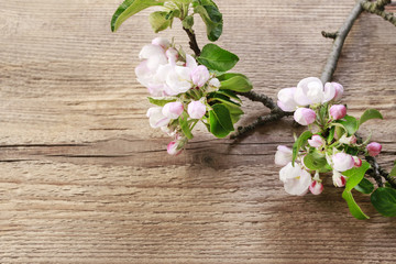 Blooming apple tree twigs on wooden background