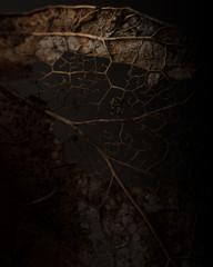 Close-up of leaf skeleton