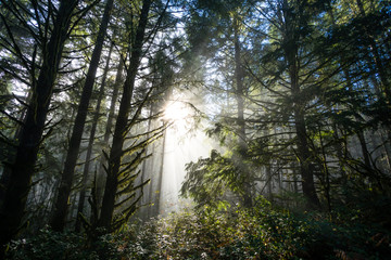 Sun Through Trees in Natural Oregon Landscape