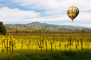Napa Valley Wine Vineyards, Spring Mustard, Mountains, Hot Air Balloon