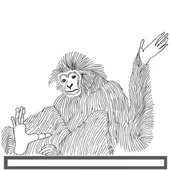 Monkey langur hand drawn on white background