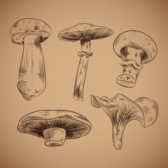 Mushroom Hand drawn vector illustration on brown background. Vectro mushroom lineart.