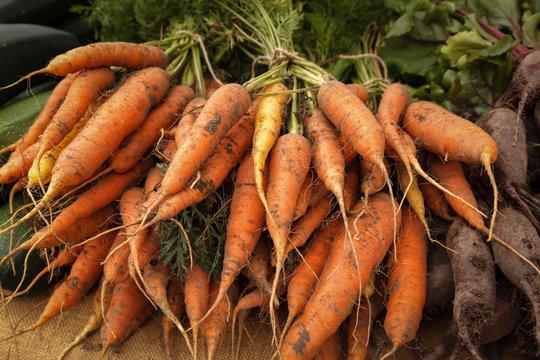 Orange Carrots in a Bundle in a Market in Ystad Sweden