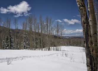 Snow Covered Meadow with Aspen Trees and Blue Sky