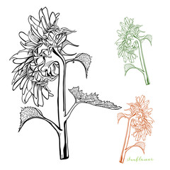 Sunflower Hand-drawn Side-view Vector