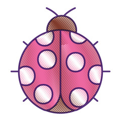 ladybug insect small icon animal vector illustration drawing design