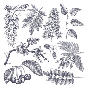 Vector set of hand drawn blossoming trees illustration. Spring design elements. Vector flowers sketch collection.